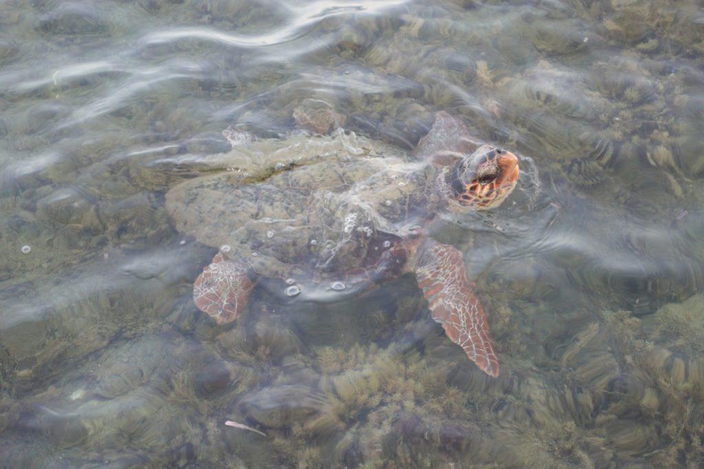 Schildpadden Cameo Island
